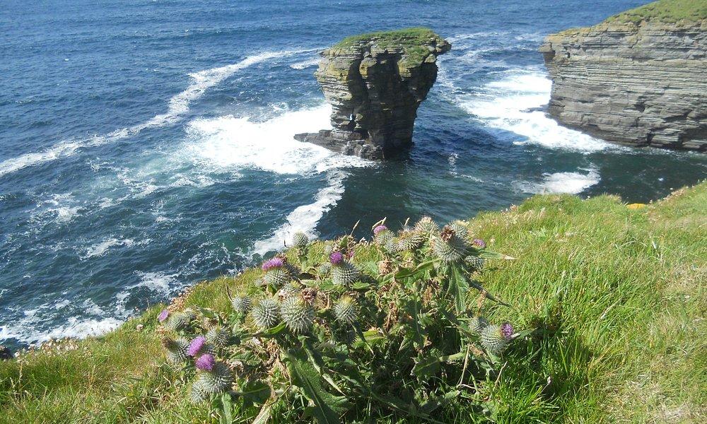In primo pianto le piante di cardo, simbolo scozzese con sullo sfondo the castle !