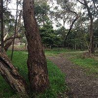 Olivers Creek Bushland Reserve