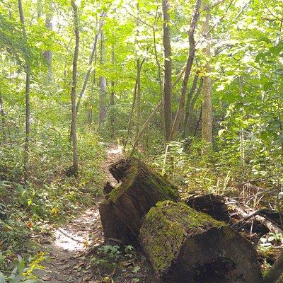 Ice Age Trail thru Carl Schurz Forest