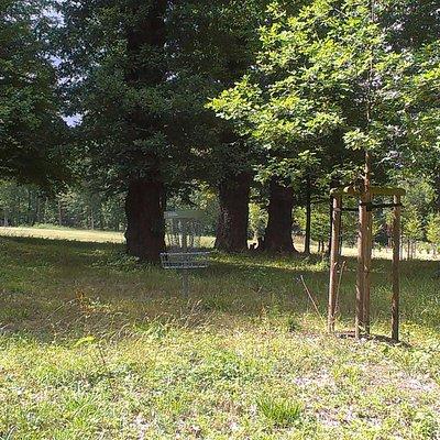 disc golf hřiště v parku