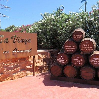 Bodegas Munar, vingård