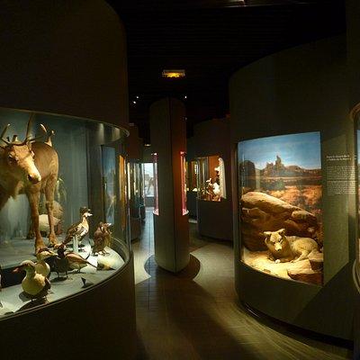 Galerie des animaux de Bourgogne