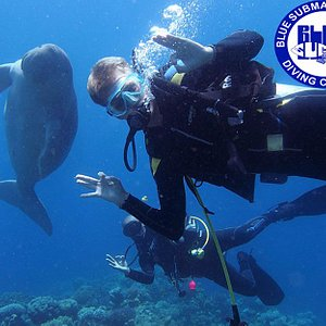 Diving with a Dugong!