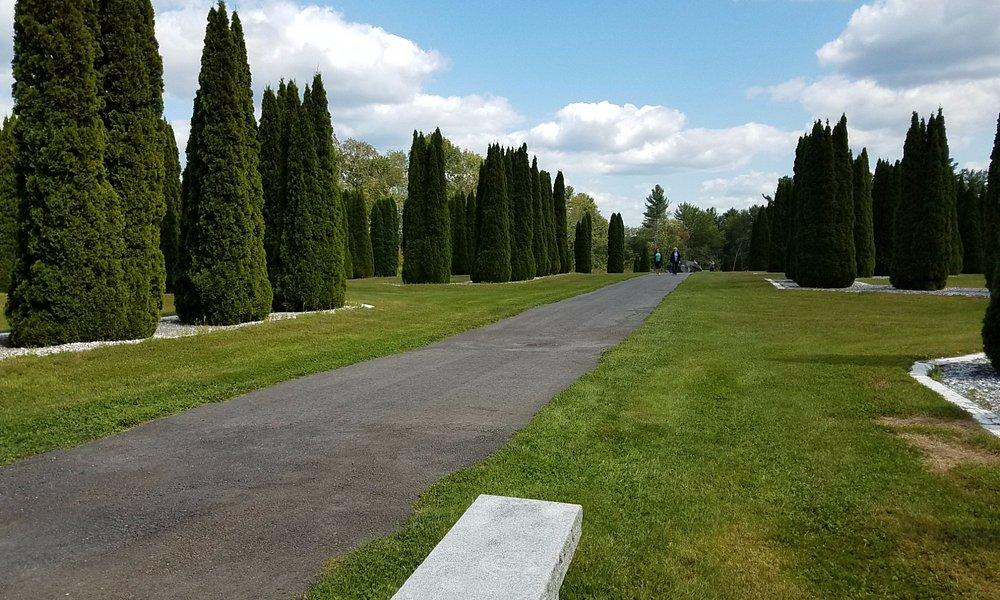emerald green arborvitae trees an amazing sight