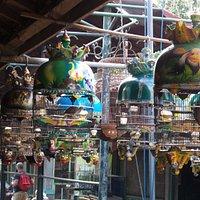 Cages et oiseaux à vendre