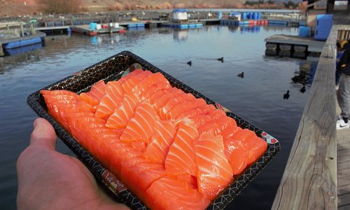Fresh high country sashimi - out of the water this morning!