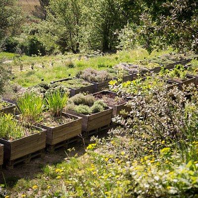 Plantes aromatiques - Jardin botanique de La Citadelle à Ménerbes