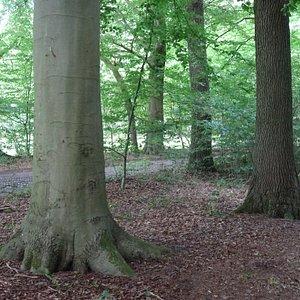 -Natuurgebied Lonnekerberg ten noorden van Enschede;Twente-