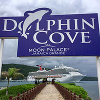 Dolphin Cove Moon Palace Jamaica Grande
