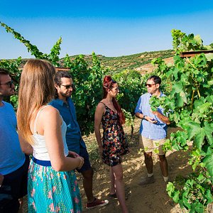 Georgios teaching a small group about the cultivation of the grape vine on a group day tour.
