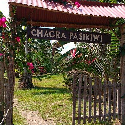 Chacra Pasikiwi