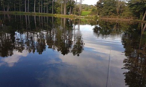 Lawfield Trout Fishery