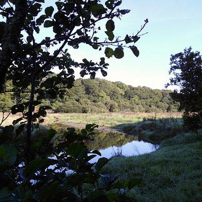 silent water meadow