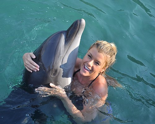 Swimming with the dolphin programme
