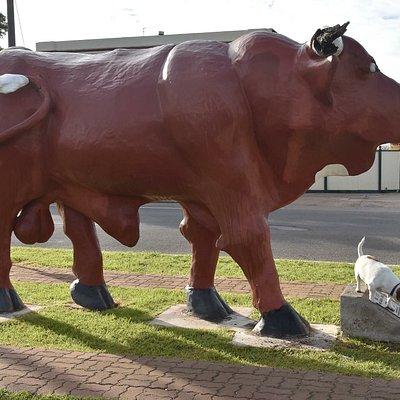 Birchip's Mallee Bull