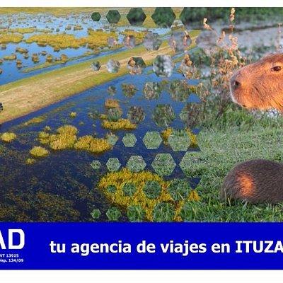 Especialistas en ESTEROS DEL IBERÁ (Safari in the wetlands)