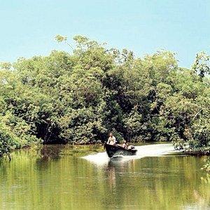 Tsini river in Akanda National Park