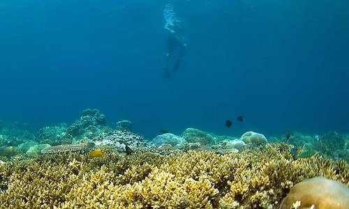 Local community for coral conservation effort since 2009 .