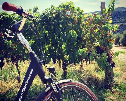 Chianti Vineyard Tour