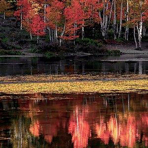 Fall Colour at Aspen Mirror Lake