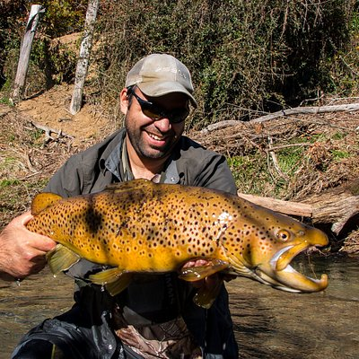 Trophy Rotorua Wild New Zealand Brown trout.