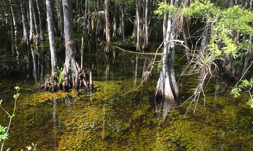 Cypresses in the water. So sad they don't organize a place where you could park and walk a trail