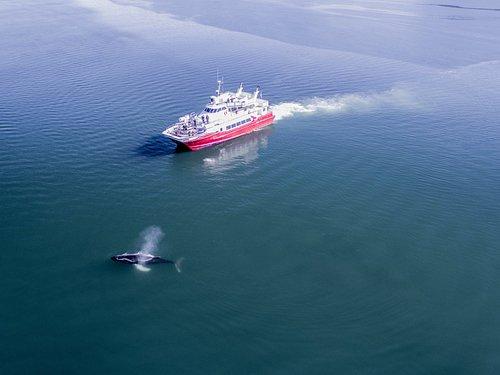 Humpback Whale with Hólmasól