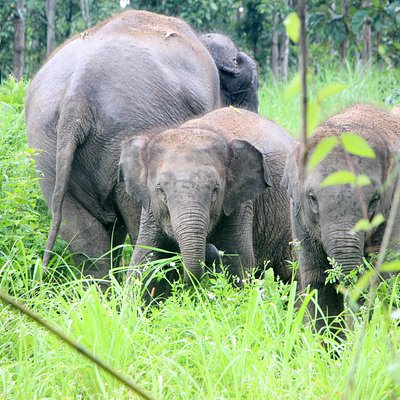 where elephants are loved and respected.