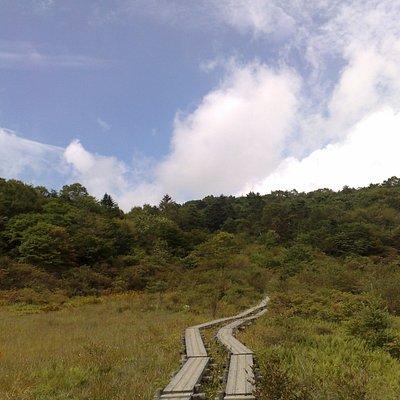 湿原内は板の歩道が整備されています。