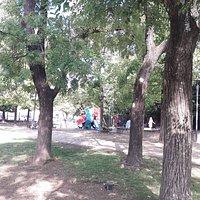 Fontanello n. 14 Via Antonini (Parco Monteoliveto, Pistoia)