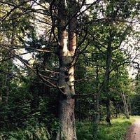 Looks like a tree :)