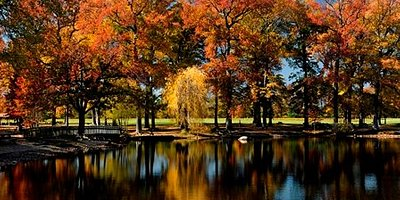 Fall Trees at Killens Pond State Park