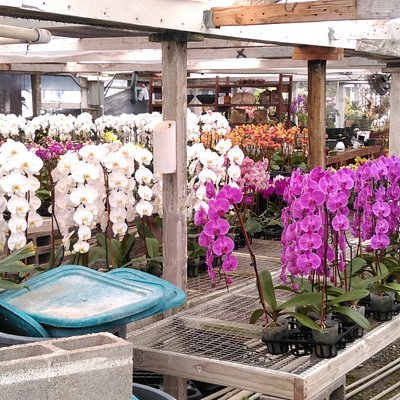 A wonderland for an orchid lover!