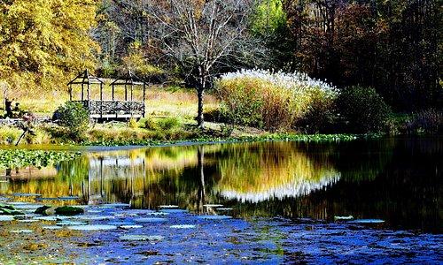 Meadowlark - Near the Lake