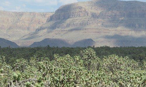 The Joshua Tree National Landmark