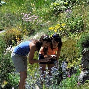 Visiteurs dans le Jardin alpin en juillet