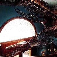 Lobby with gigantic dinosaur