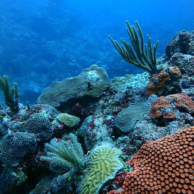 healthy coral reef in taganga.