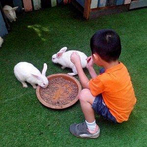 Bunny to feed