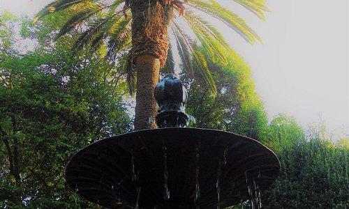 Fuente con palmera