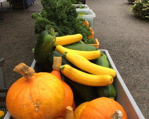 pumpkins (30kr per kilo) & zucchini (10kr each)!
