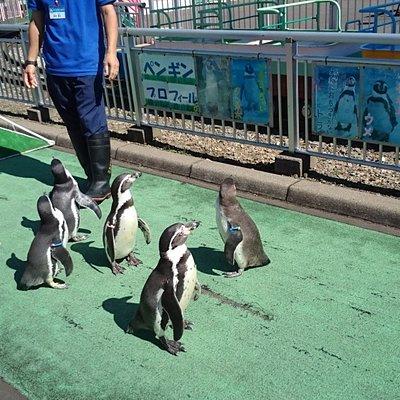 11時と15時のペンギンの散歩