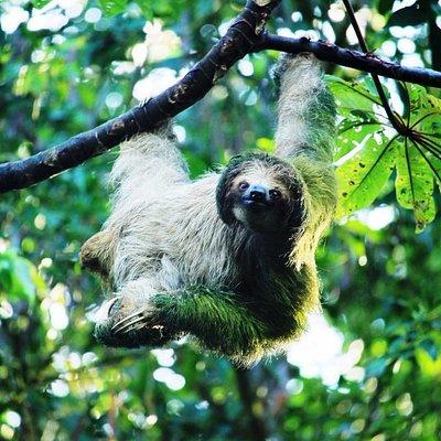 Rainforest wildlife of Costa Rica