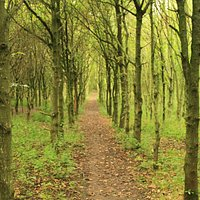 Footpath through Spud Wood
