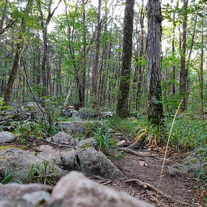 The 2-mile Cedar Loop offers some great, relatively easy hiking with nice surroundings