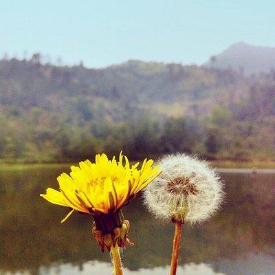 Bunga cantik yang terdapat di situ cisanti