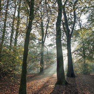 Autumn Rays - Early morning in Hurst Grange Park