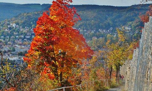 Weg zum Jelzig mit Herbstfärbung