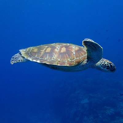 Slowly  and relax turtles