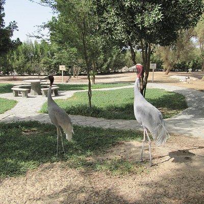 Aman Zoo, Bahrain by TravellerGroups Photographer